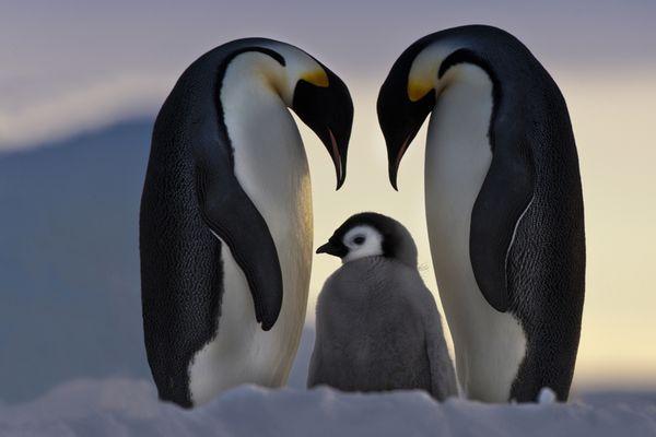 antartica8