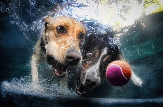 diving-dogs-photography4-550x363