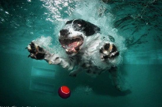 diving-dogs-photography5-550x363