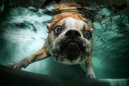 diving-dogs-photography7-550x366