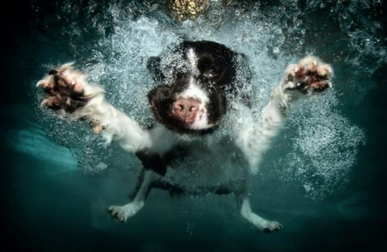diving-dogs-photography9-550x359